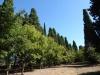 Conferencia: De jardines atómicos a recuperación de bosques. Transformaciones en los paisajes madrileños en los últimos 60 años