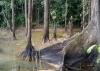 Región del Área de Manejo Especial La Macarena (AMEM, Amazonía Colombiana): Derechos Humanos y Cambio Climático